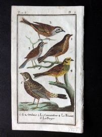 Buffon 1785 Antque Hand Colored Bird Print. Ortolan Bunting, Sparrow 8-1